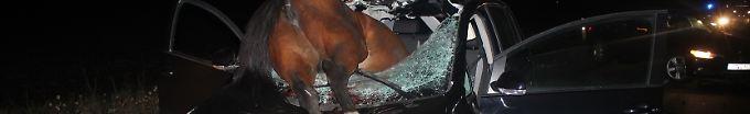 Der Tag: 08:40 Pferd kracht durch Windschutzscheibe