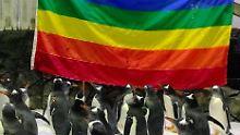 """""""Sphengic"""" ist da: Schwule Pinguine sind Eltern geworden"""