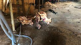 Noch am Morgen des Abrisses bot sich den Tierschützern auf dem Gelände ein grausamer Anblick.