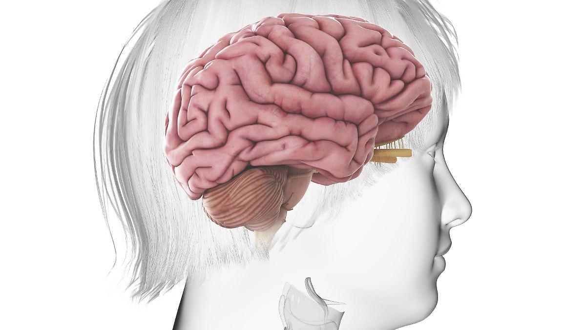 Vermessungen Der Grauen Substanz Lsst Bergewicht Das Gehirn