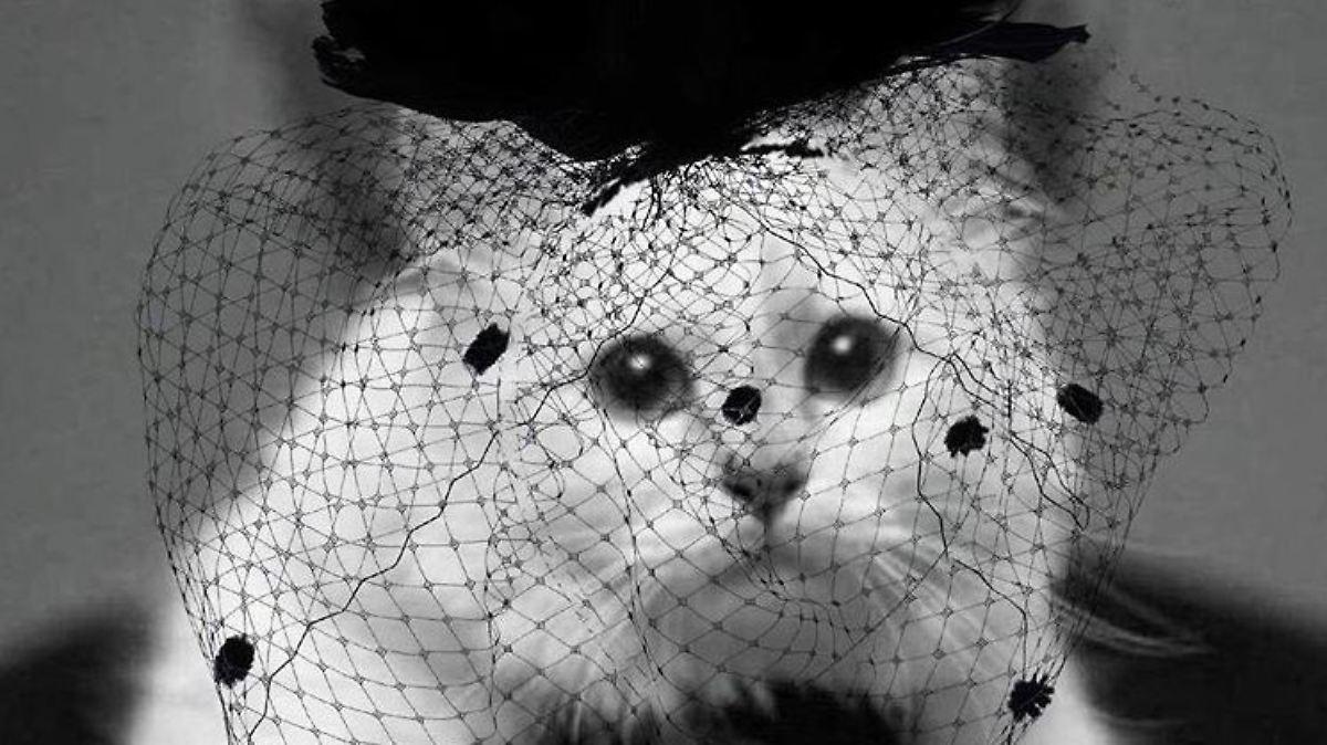 Choupette Tragt Trauer Lagerfelds Katze Veroffentlicht