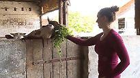 Agrarwirtschaft am Subventionstropf: Landwirte blicken mit Sorge auf die Europawahl