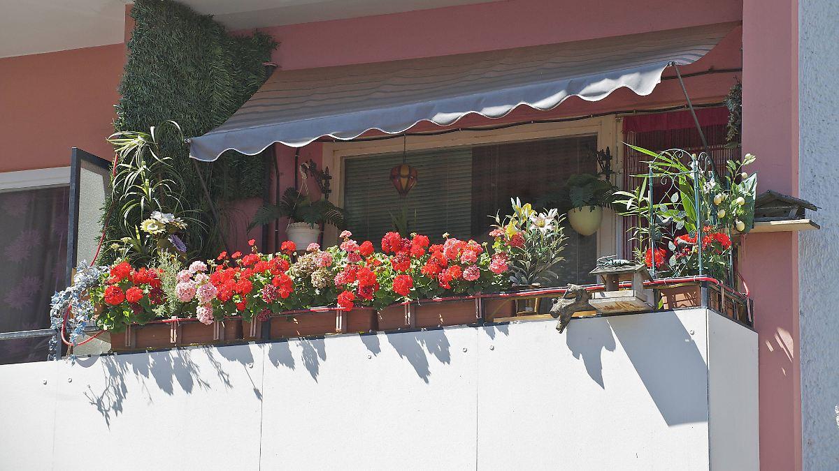 Welche Balkonpflanzen nicht erlaubt sind