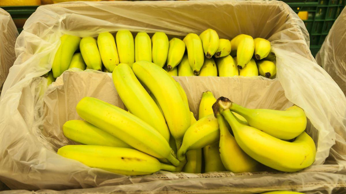 Supermarkt-Banane vom Aussterben bedroht