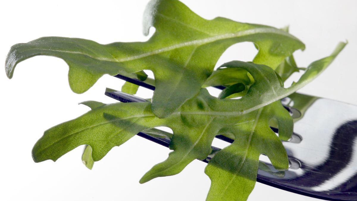 Rucola-Pesto mit wenig Rucola kein Betrug