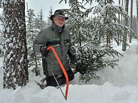 Selbst geschlagene Bäume aus Durchforstung sind länger frisch und zudem ökologischer.