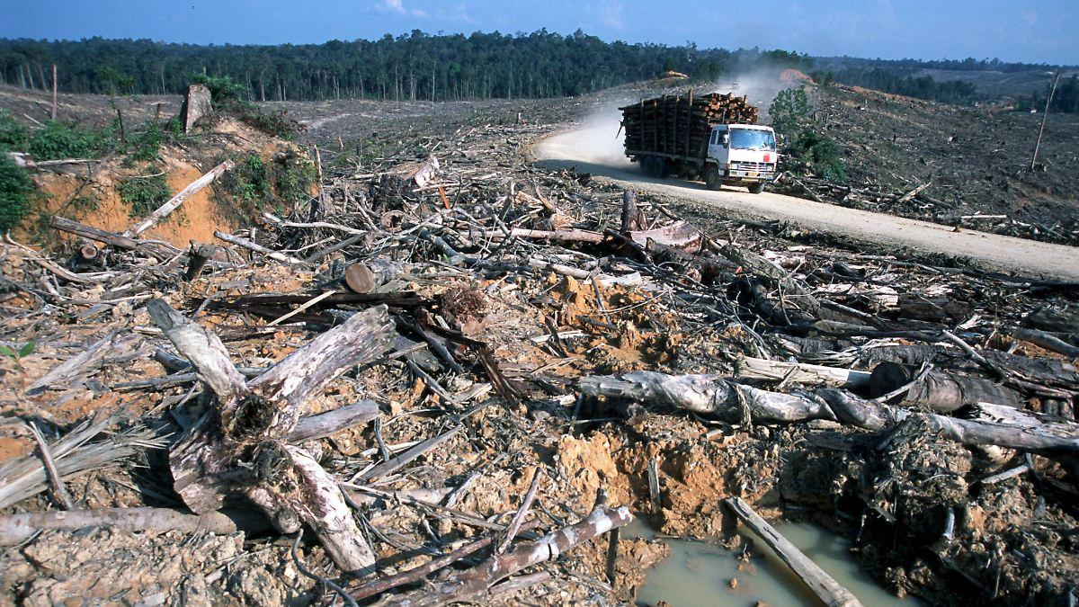 Millionen Hektar zerstört: Raubbau am Regenwald schreitet voran