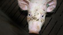Gifte, die von Tieren aufgenommen werden, landen letztlich im fleischessenden Menschen.
