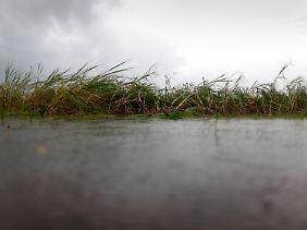 In Australien vernichten Fluten die Ernte.