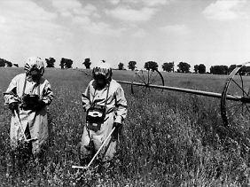 Spezialeinheiten messen auf einem Feld innerhalb der Sicherheitszone von Tschernobyl die Radioaktivität (im Mai 1986 - rund einen Monat nach der Katastrophe).