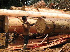 Die Umweltstiftung WWF warnt vor einem dramatischen Verschwinden der Wälder weltweit.