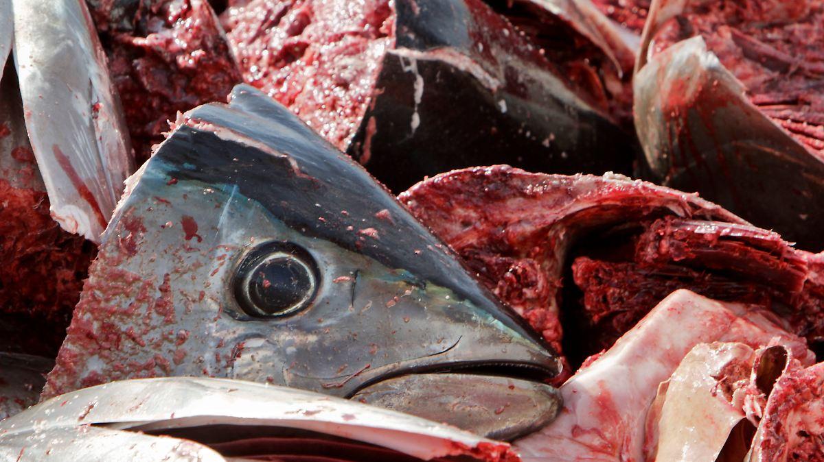 Lecker gesund bedroht welche fische darf man kaufen for Welche fische im teich