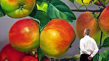 Food Miles nagen am grünen Gewissen: Ist Bio-Obst aus Übersee eine Öko-Sünde?