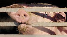 Bilderserie: Die ekligsten Lebensmittelskandale