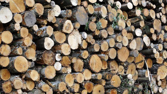Holz wird seit Jahrtausenden für den Bau von Häusern und Möbeln verwendet - nun haben Forscher seine Eigenschaften verändert und an moderne Anforderungen angepasst.