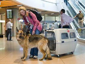 Die Reise mit dem Tier innerhalb der EU sollte gut vorbereitet sein.