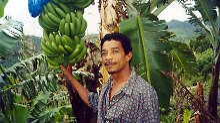 Bananenanbau auf Dominica.