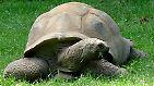 Gepanzert, friedlich und bedroht: Schildkröten