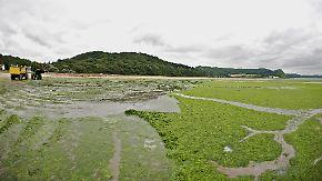 Grüne Plage in der Bretagne: Gefährliche Algen vermiesen Badespaß