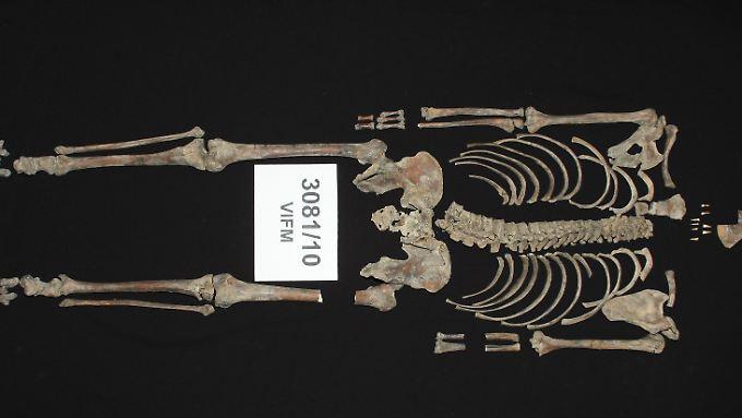 Das Skelett von Kelly - ohne Kopf.