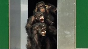 Rührende Bilder: Labor-Affen sehen erstmals die Sonne