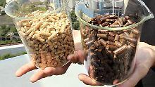 Biomasse gilt als Energieträger der Zukunft.