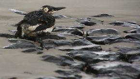 Natur leidet Jahrzehnte: Die größten Öl-Katastrophen