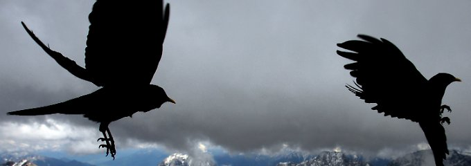 Dohlen vor aufziehenden Regenwolken auf der Zugspitze bei Grainau (Oberbayern).