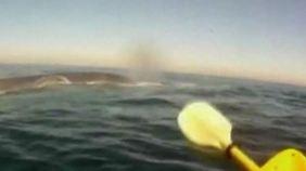Besondere Begegnung: Blauwal kommt Kajakfahrern ganz nah