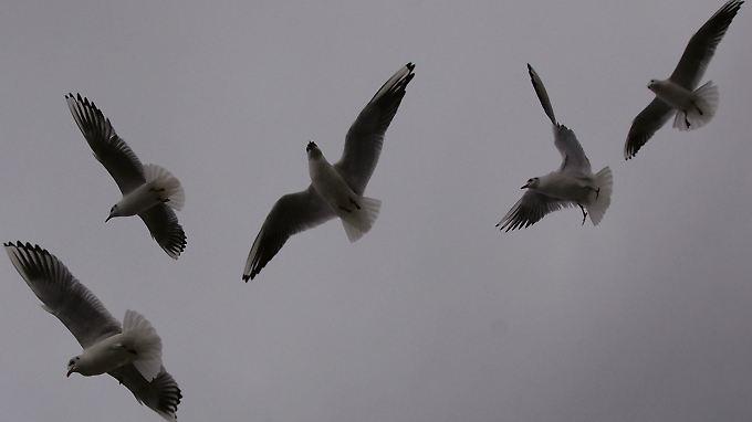 Nimmt der Sturm zu, rücken die Möwen dicht zusammen. Andere Vögel reagieren anders.