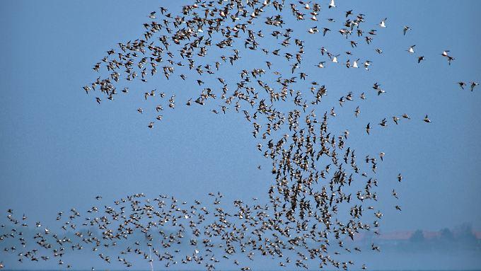 """Insbesondere junge Menschen steigen wie Vögel auf und fallen als Schwarm in vergleichsweise wenige """"Schwarmstädte"""" ein."""