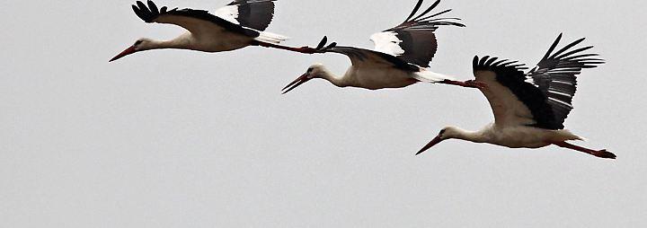 Faszinierendes Naturspektakel: Wenn die Vögel ziehen
