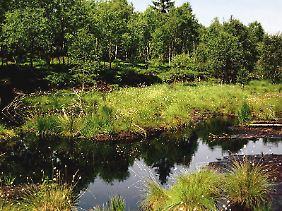 Einmal zerstörte Hochmoore und andere Feuchtgebiete sind kaum wiederherzustellen.