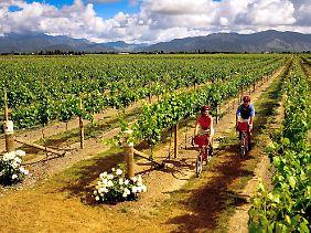 """Wie hier in der Region Marlborough wird Wein in Neuseeland überall zu ebener Erde angebaut - """"Weinberge"""" gibt es in der Hügellandschaft nicht."""