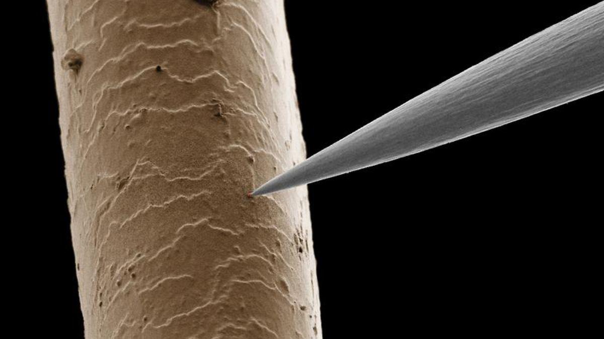 Fische fressen langsamer nanoteile ver ndern stoffwechsel for Welche teichfische fressen algen