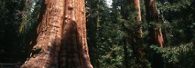 Mehr Naturschutz in US-Nationalparks.