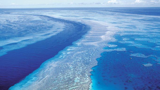Das größe Korallenriff der Welt, das Great Barrier Reef, ist in Gefahr.