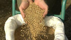 Jetzt dürfen Bauern ihr selbst angebautes Getreide wieder aussäen und auch verkaufen.