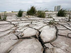 Bisher war der Kampf der Welt gegen den Klimawandel nicht erfolgreich genug: ausgetrocknete Mangrovenwälder im mexikanischen Cancun.