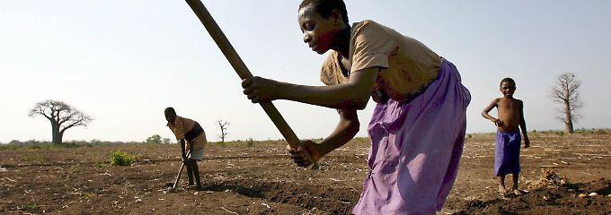 Bauern in Malawi.
