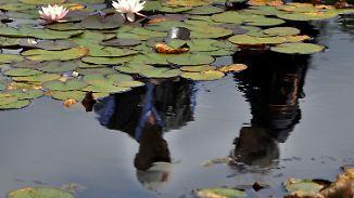 n-tv Ratgeber: Schwimmteiche im eigenen Garten