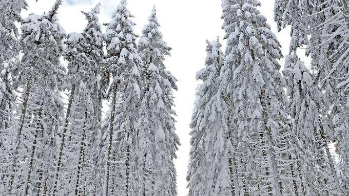 Noch hält die Schneepracht, doch bald wird es vermutlich auch im Vogtland tauen.