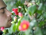 Phänomenale Nase: Mensch erkennt eine Billion Gerüche