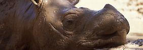Bilderserie: Besonders stark bedrohte Spezies