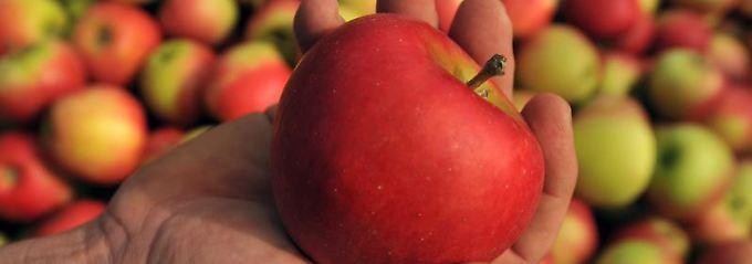Vitaminreiche Früchte machen Jugendliche fit für den Alltag. Neben Vitamin A, C und D ist aber auch der Nährstoff Eisen wichtig.