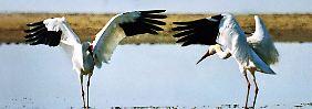 Ein Feuchtgebiet in Zentralchina: Mehr als eine halbe Million Wasservögel bezieht hier im Winter Quartier.