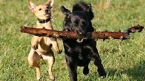 n-tv Ratgeber: Können Haustiere erben?