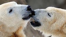 Artenschutzkonferenz 2010: Letzte Chance für bedrohte Arten