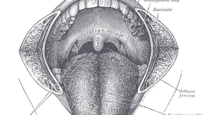 HNO- und Zahnärzte kennen das Rachenzäpfchen, bei ihnen Uvula genannt, in den unterschiedlichsten Ausprägungen.