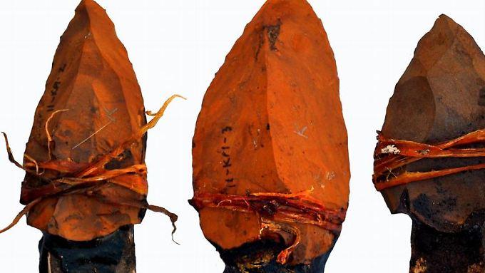 Beispiele von versuchsweise nachgebauten Speerspitzen, die mit Akazienharz und Sehnen an hölzernen Pflöcken befestigt wurden. Foto: Jayne Wilkins / Eurekalert